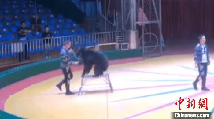 西安秦岭野生动物园回应虐熊事件:责成开除当事人