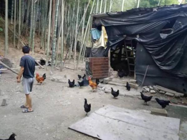 龙建兵养鸡场