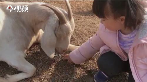 灘涂變網紅打卡地 贛江邊這個牧場你去過嗎?
