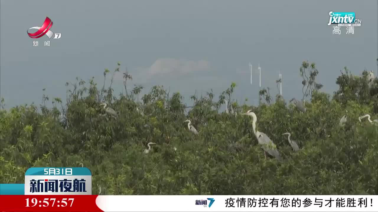 鄱陽湖:蒼鷺曬翅醉游人