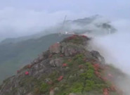 吉安泰和:高溫下的深山養蜂人 山崖間采收百花蜜