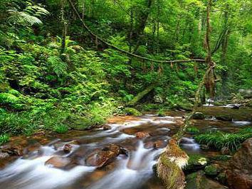 九连山入选中国最美森林:龙南境内 系江西唯一上榜