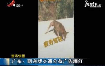 广东:萌宠版交通公益广告爆红