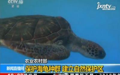 农业农村部:保护海龟种群 建立自然保护区