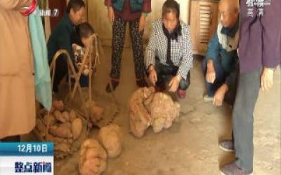 """江西万载:红薯""""巨无霸"""" 重达18.84公斤"""
