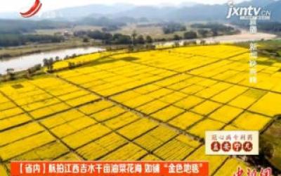 """航拍江西吉水千亩油菜花海 如铺""""金色地毯"""""""
