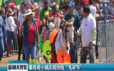 """墨西哥小镇庆祝传统""""毛驴节"""""""