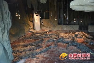 鳄鱼吹暖气蟒蛇盖被子 动物园动物过冬各有妙招