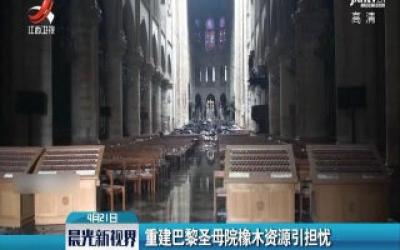 重建巴黎圣母院橡木资源引担忧