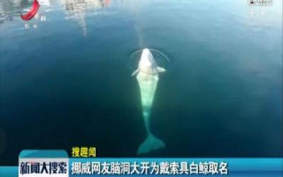 挪威网友脑洞大开为戴索具白鲸取名