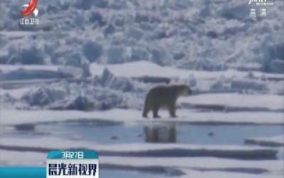 白令海连续第二年冬季海冰少
