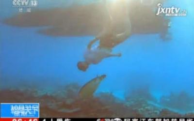 农业农村部:集中放归大批救助海龟