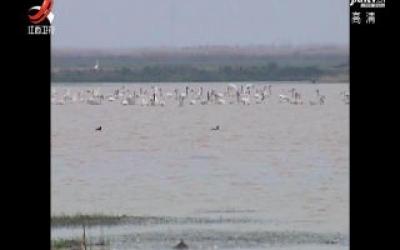 鄱阳湖保护区鸟类种数达381种
