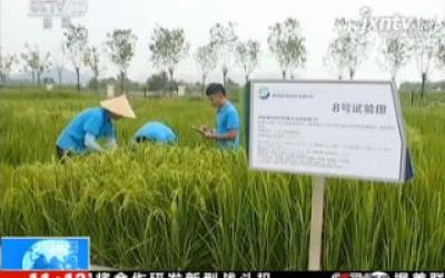 我国2018年首次大范围试种海水稻