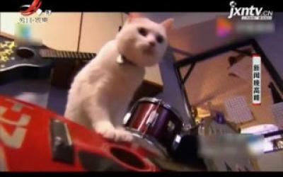美国:摇滚明星猫