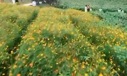 赣州寻乌:美不胜收 端午假期踏青赏花
