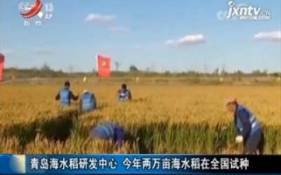 青岛海水稻研发中心 2019年两万亩海水稻在全国试种