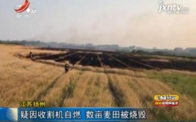 江苏扬州:疑因收割机自燃 数亩麦田被烧毁