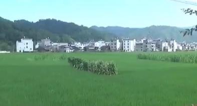 上饶婺源:生态县里的泥水河?
