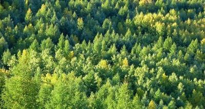 广东林业局考察组来景德镇学习考察林长制工作