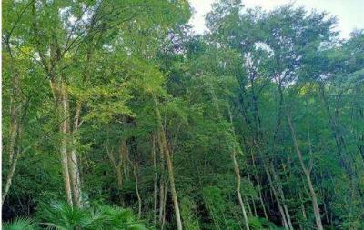 景德镇市领导率领调研组到珠山区调研林长制工作