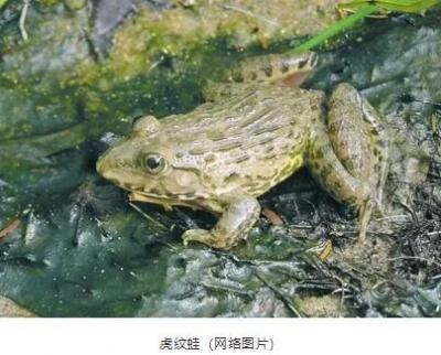 余江一男子贩卖野生动物被判刑