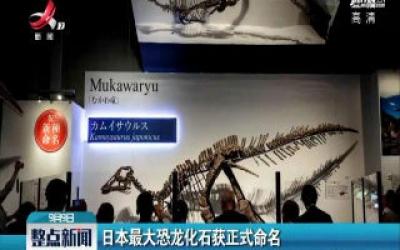 日本最大恐龙化石获正式命名