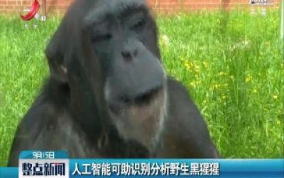 人工智能可助识别分析野生黑猩猩