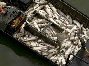 婺源县星江河捕鱼泛滥 水生态环境遭到破坏