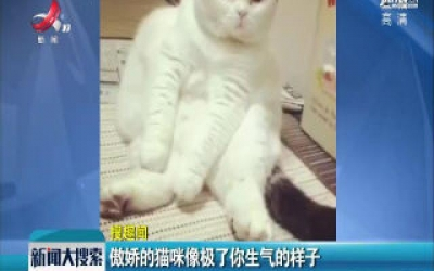 傲娇的猫咪像极了你生气的样子