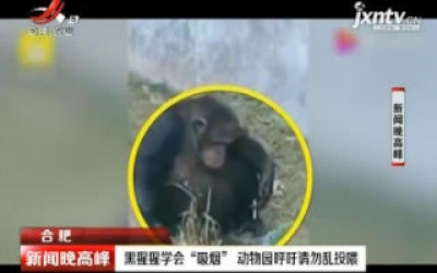 """合肥:黑猩猩学会""""吸烟"""" 动物园呼吁请勿乱投喂"""