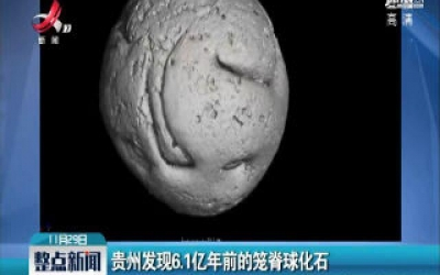 贵州发现6.1亿年前的笼脊球化石