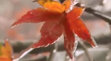 大风降温·庐山:一夜之间 雨凇满枝头