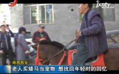 陕西西安:老人买矮马当宠物 想找回年轻时的回忆