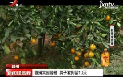 赣州:偷摘果园脐橙 男子被拘留10天