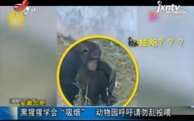 """安徽合肥:黑猩猩学会""""吸烟"""" 动物园呼吁请勿乱投喂"""