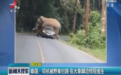 泰国:司机被野象拦路 在大象脚边惊险逃生