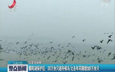鄱阳湖保护区:28万余只越冬候鸟 比2018年同期增加9万余只