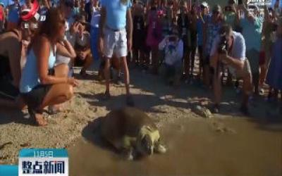 美国受伤海龟身体康复回归大海