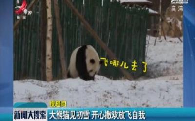 大熊猫见初雪 开心撒欢放飞自我
