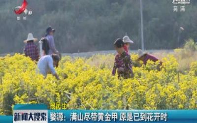 婺源:满山尽带黄金甲 原是已到花开时