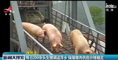 每日200余头生猪调运萍乡 保障猪肉供应价格稳定