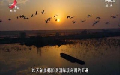 政策面对面20191208 首届鄱阳湖国际观鸟周