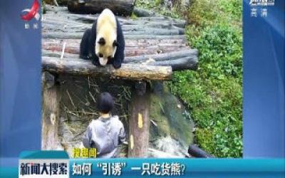 """如何""""引诱""""一只吃货熊?"""