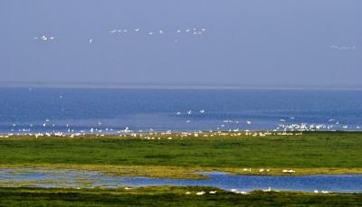 帮助受救助候鸟赶上迁徙大部队 200余只候鸟在鄱阳湖畔放飞