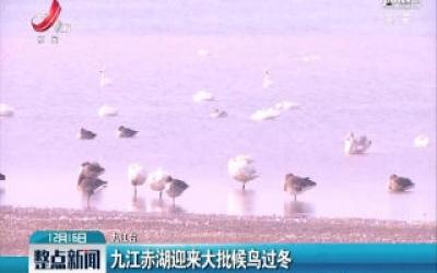 九江赤湖迎来大批候鸟过冬