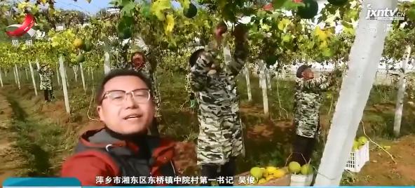 """【第一书记晒丰收】萍乡市中院村:""""小瓜蒌""""长成""""金疙瘩"""""""