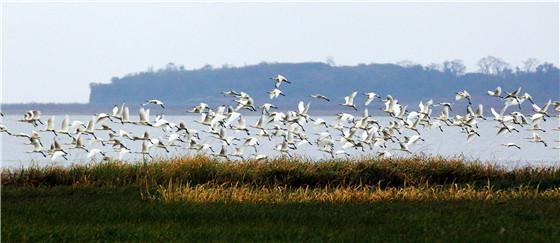 鄱阳湖监测到水鸟66.7万余只 比去年同期增多近17万只