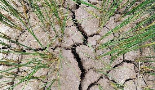江西:风雨一起来 有望缓解旱情