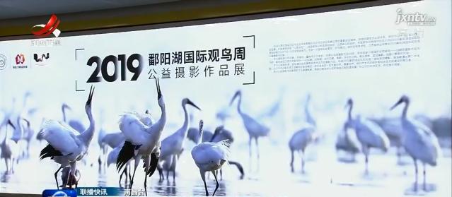 2019鄱阳湖国际观鸟周公益摄影展开展